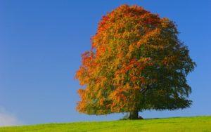 witnessing beech tree